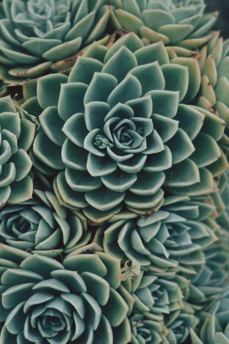 Plant photo by Heather Pizano on Unsplash